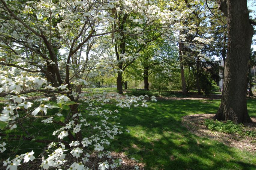 Maxwell Arboretum.