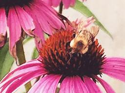Prairie Pines will host a Second Saturday on pollinators.