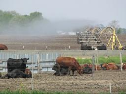 3.A few important questions should be asked before applying animal manure/effluent to a growing crop. Photo courtesy of Larry Howard.
