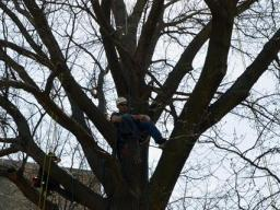 An SNR student climbs to the top of his rope during a spring semester exercise in the arboriculture class.   Shawna Richter-Ryerson, Natural Resources