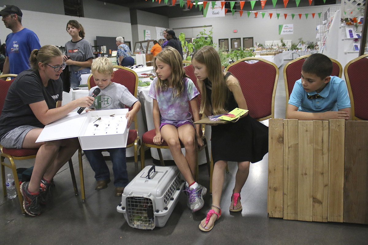 Many 4-H Clover Kids (ages 5–7) who entered static exhibits also participated  in Show & Tell. Clover Kid activities are non-competitive, and they receive  rainbow participation ribbons. Pictured is a youth talking about his insect collection box.